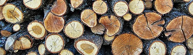 publicaciones en línea - guía práctica de especies de madera